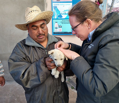 veterinary services in Copper Canyon Mexico, small puppy