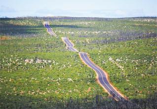 Flinders Chase NP