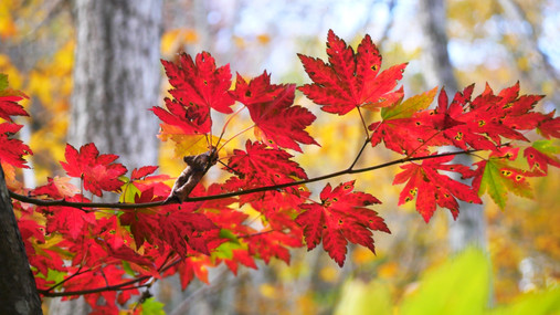 JAPAN BY RAIL - Autumn Colour