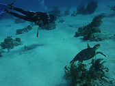 Diving - Turks and Caicos.JPG