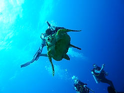 All Inclusive Vacations - Diving