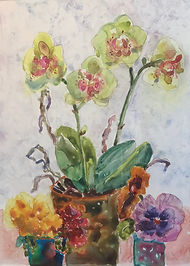 Orchids and Pansy