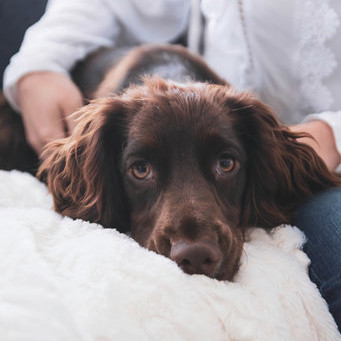 Dog-friendly interior tips for your home
