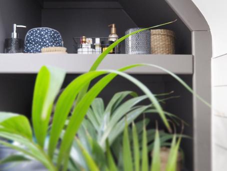 Houseplant Appreciation Day   Best Plants and Hacks to Enjoy