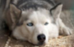 The Dog Life- Dog Behaviourist- Dog Trainer- Dog Training- Puppy Training- Residential Training- UK- Scotland- Inverness
