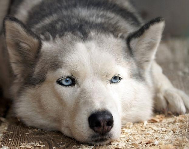 Hund Arthrose Tierheilpraktiker Rheinland-Pfalz Saarland
