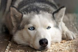 Cães e gatos transmitem o coronavírus? O que sabemos até o momento