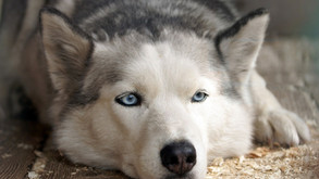 החמאס מאיים גם על רקסי, כיצד ניתן להגן על חיות המחמד במצב חירום?