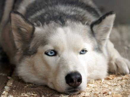 Do our dogs feel guilt?