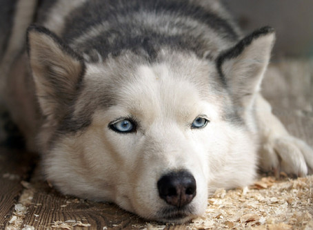 Is your dog depressed? How to read the warning signs