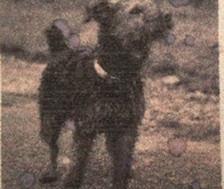 Chapek The World War Two Mascot