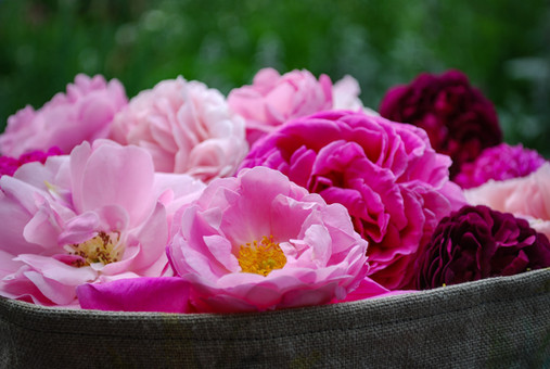 Such a range of roses in the garden now...