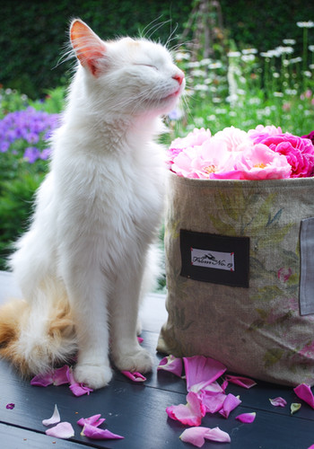 Max loves the smell of roses as much as I do :-)
