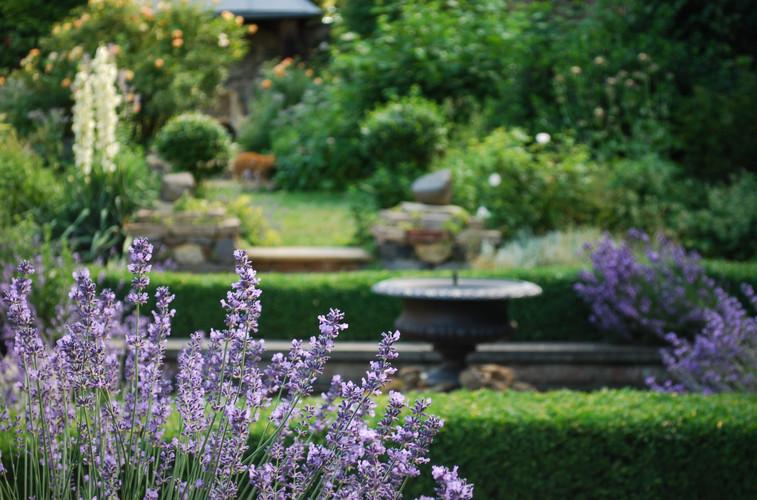The Lavender