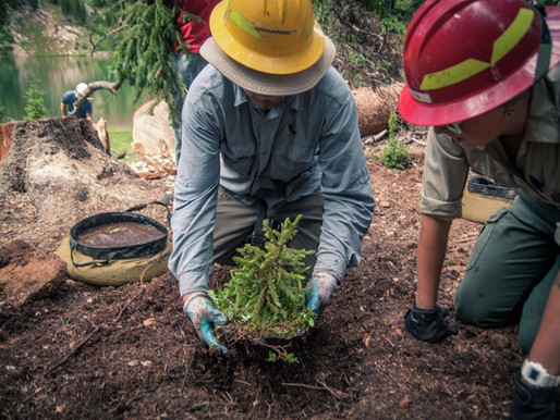 How Companies are Offsetting their Carbon Footprint by Planting Trees
