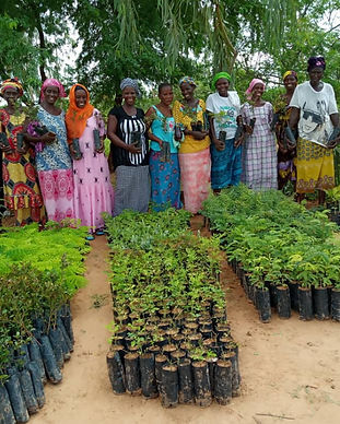 Senegal Planting Site.jpeg