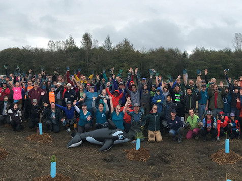 Pacific Northwest Orca Project 6.jpg