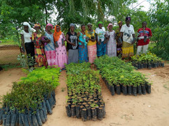 Senegal Planting Site.jpeg