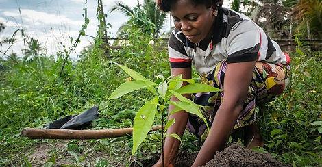 Haiti Planting SIte.jpg