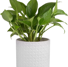 Water Infused Plant