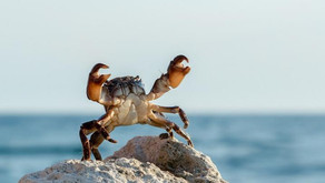 Stamping out the crab mentality