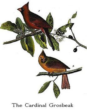 CardinalPhto.jpg