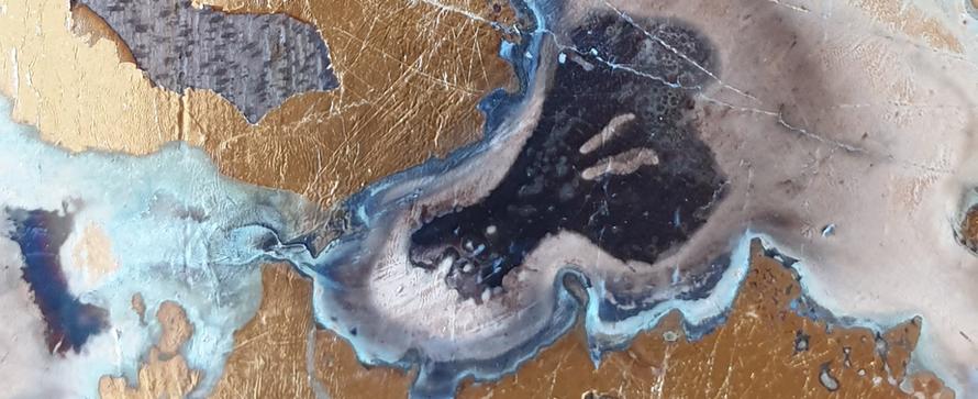 méduses zoom