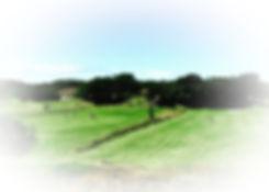 2020-05-17_12-08-18_edited_edited.jpg