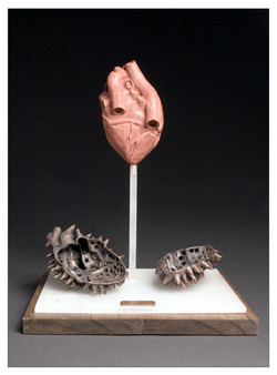 Vulnerable Heart