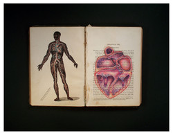 A Treatise on Physiology (Heart)