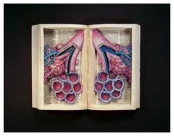 New Encyclopedia of Health (Alveoli)