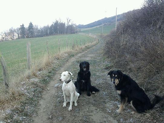 Les chiens médiateurs de Teena&Co