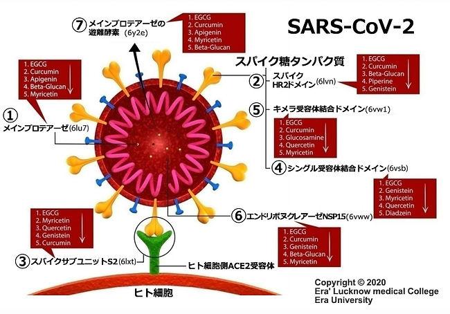 新型コロナ_ウイルス_スパイクたんぱく質への分子結合イメージ.jpg
