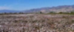 トルコ ブルダンの綿花畑
