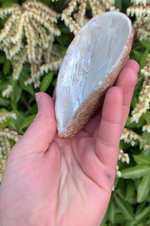 Medium Mussel Shell