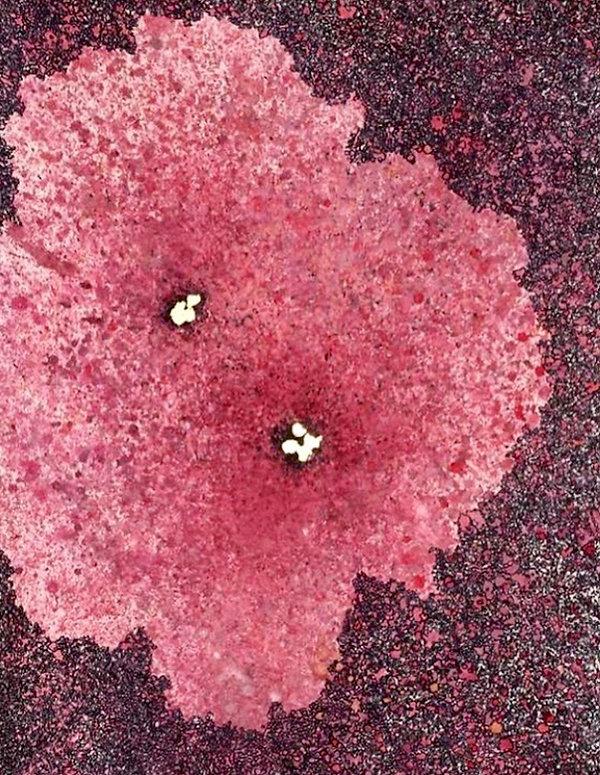 Flower REDO.jpg