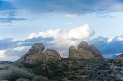 Desert Beauties.