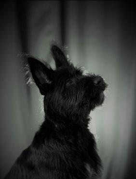 black pup.png