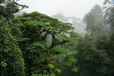 Cloud forest landscape of Monteverde Cos