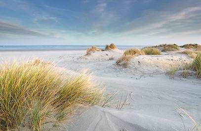 sand dunes at North sea beach, Schiermon