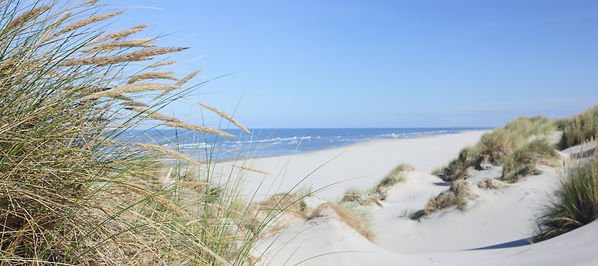 Dune grass and North sea beach.jpg
