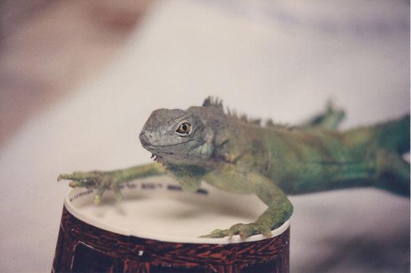 Zack's Zone Iguana Puppet 1.jpeg