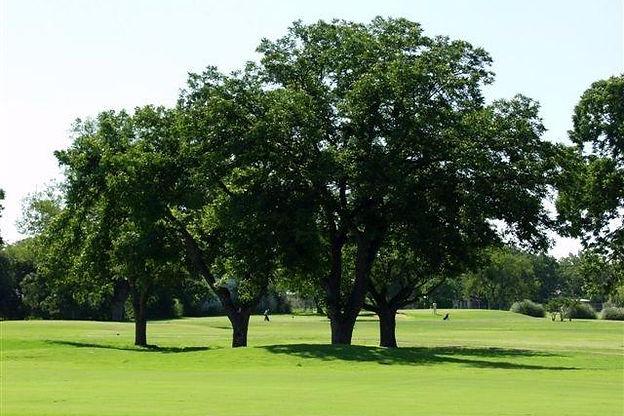 Golfc.jpg