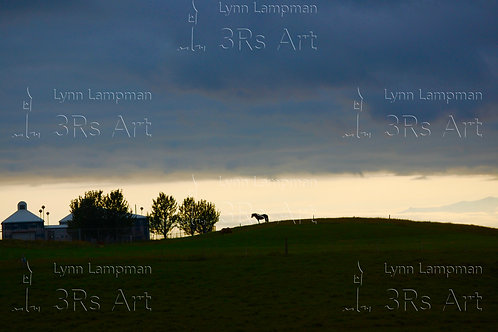 Horse Silhouette at Dusk