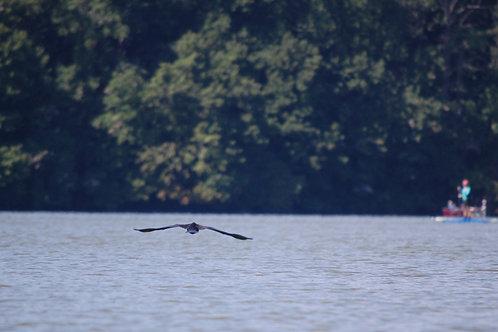 Cormorant and Fisherman