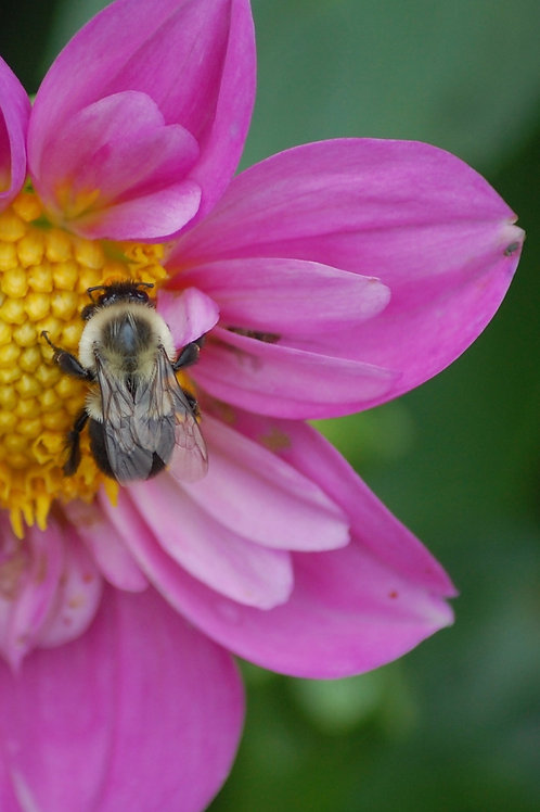 Bee for Nectar