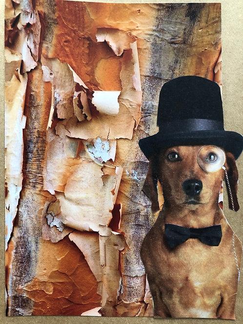 Investigating the Bark
