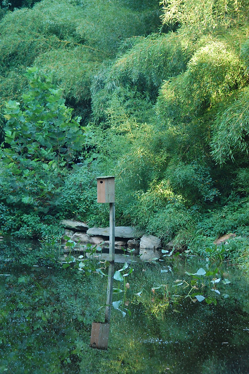 Nesting Box Reflection in Water