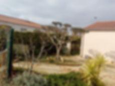 olivier taillé en nuage