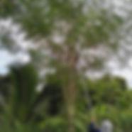 Image_e116fb6.jpg